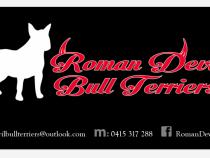 Roman Devil Terriers by Derek